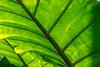GDM_1010.jpg (GDMetzler) Tags: garden chicagobotanicalgaden spring flowers d500 nikon tamron gdmetzler illinois greenhouse green sunshine lines