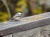 Mésange à tête noire (Brewso) Tags: olympus m43 mésange μ43 oiseau panasonicleicadgvarioelmar100400mmf463asphpowerois nature bird omdem1mll panasonicleicadgvarioelmar100400mmf463asphpoweroi