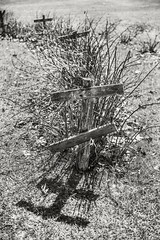 VT Sculpture Garden (frntprchprss) Tags: plants bushes spring sticks thorns sculpturegarden jamesgehrt blackandwhite