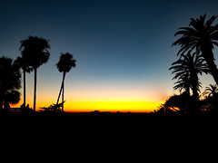 Florida Coast Silhouette (aparlette) Tags: samsunggalaxys8 spring landscape sunset orange florida palm beach phone tree sarasota twilight black unitedstates silhouette color lidobeach arecaceae dusk palmtree s8 us