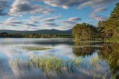 Loch Garten (Peter Quinn1) Tags: lochgarten cairngorms scotland tranquil calm serene morning summer highlands rspb speyside sedge emergentvegetation