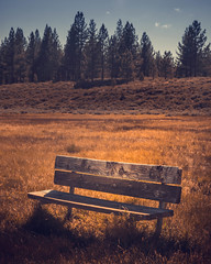 A wooden bench in a open field in a Martis Creek trail with lots of trees in a sunny blue sky day in Truckee, California. (pedferr) Tags: wood usa landscape sunset wooden nature vertical truckee moody rural morning orange sunrise bluesky california summer unitedstatesofamerica warm tree tahoe sunny diagonal sky park color bench outdoors field