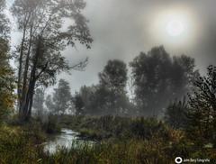 Morning fog (john_berg5) Tags: inn fog nebel creek flus nature landscape bavaria sunlight