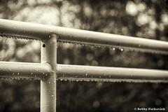 Rain on the rail (BobbyFerkovich) Tags: rain rail trees fence