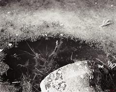 Life Underwater (fs999) Tags: fs999 fschneider aficionados zinzins plaubel makina 67 plaubelmakina67 6x7 film camera filmcamera 60x70 ashotadayorso topqualityimage topqualityimageonly artcafe pentaxart corel paintshoppro paintshoppro2018ultimate 2018ultimate nikkor12880mm nikon nikorr 128 80mm 8028 rollei retro 80s retro80s rolleiretro80s r80s 80iso blackwhite blackandwhite bw noirblanc noiretblanc nb blackwhitephotos caffenol clcs cold start stand home development plustek opticfilm 120 scanner 2400dpi silverfast ai studio luxembourg luxemburg lëtzebuerg steinsel