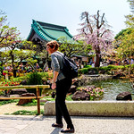 At Garden of Hase Temple, Kamakura : 鎌倉・長谷寺 thumbnail