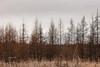 Dull Day (Nataša Bandović) Tags: forest wood trees tree dullday spring sky weather colours natasabandovic natasabandovicphotography canondslr canonphotography nature naturephotography ontario canada explorecanada outdoors getoutside exploring