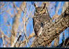 Great Horned Owl (ctofcsco) Tags: 1500 20x 2x 7d 7dclassic 7dmark1 7dmarki 800mm canon colorado didnotfire digital ef2x ef2xii ef400mmf28liiusm20x eos eos7d esplora evaluative explore explored extender f80 flashoff iso200 manual photo pic pretty renown supertelephoto teleconverter telephoto unitedstates usa 2018 alamosa birds cranes geo:lat=3745997671 geo:lon=10614014486 geotagged image landscape migration montevista montevistanwr nationalwildliferefuge nature northamerica photograph picture sanluisvalley sandhillcrane sandhillcranefestival spring wildlife wwwmvcranefestorg zinzer