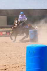 JBC_6342.jpg (Jim Babbage) Tags: krahc bethany appaloosa horses horseshow 2018