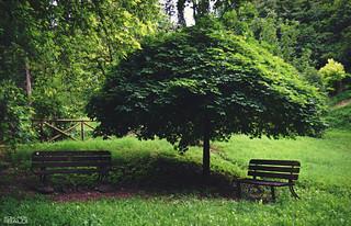 L'albero che si crede ombrellone 😉