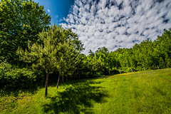 trees-1_MaxHDR_Contrast (old_hippy1948) Tags: trees sky grass