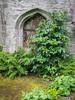 St David's Door (Tina Westcott) Tags: door gothic st davids welsh poppy