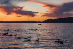 Lake Washington Sunset (BobbyFerkovich) Tags: lake washington thebristolapartments sunset clouds water sonya7riii