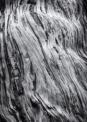 Texture (Daniel_Hache) Tags: log buche texture
