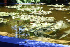 Lilly pond with frog (koukat) Tags: majorelle gardens marrakech morocco moroc marruecos jardines ysl cactus cacti blue azul palms botanical berber fuente fountain agua water feature