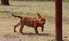 Sorpresa (Vicius by Alan Hernández) Tags: dog perro puppy cachorro sorpresa sorprise