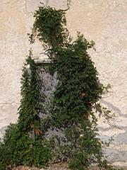 Covered Entrance (jHc__johart) Tags: vine wall oklahoma trumpetflower wood