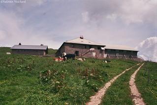 SF___2_00036 - En Corjon, Alpine pasture farm - Switzerland