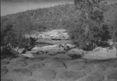 Ansco Cadet 05 (thesnapshotinitiative) Tags: ansco b2 cadet 120 film vintage camera sabino lake trail hike canyon caffenol fomapan