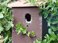 0783 Not entranced (Andy - Busy Bob) Tags: bbb nestingbox nnn birdbox box wabisabi www