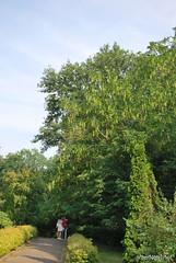 Київ, Ботанічний сад імені Фоміна Ukraine InterNetri 15