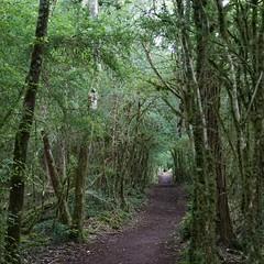 Mosbos bij Village de Madeleine (Leo van Zanten - Fotoalbum (Photoalbum)) Tags: mosbos villagesdemadeleine vézère wandelpad bos boswandeling bospad inhetbos woods forest groen green