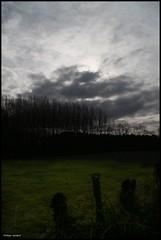 Oizé (Sarthe) (gondardphilippe) Tags: oizé sarthe maine paysdelaloire champ field arbre tree arbres trees ciel sky paysage landscape