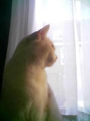 Bennievitrage (PJ Mirella) Tags: windows cats bennie catsandwindows