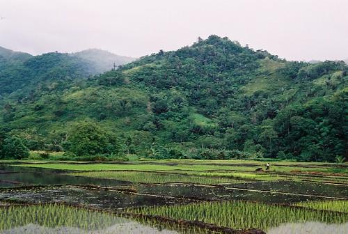 Rice paddies in Moni village