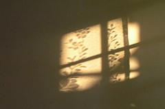 good morning - inside (shafina) Tags: morning shadow window malaysia petalingjaya selangor