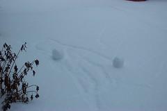 self-rolling snowballs