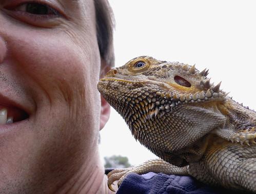 australian bearded dragon french kiss