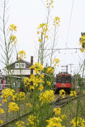 菜の花と銚子電鉄