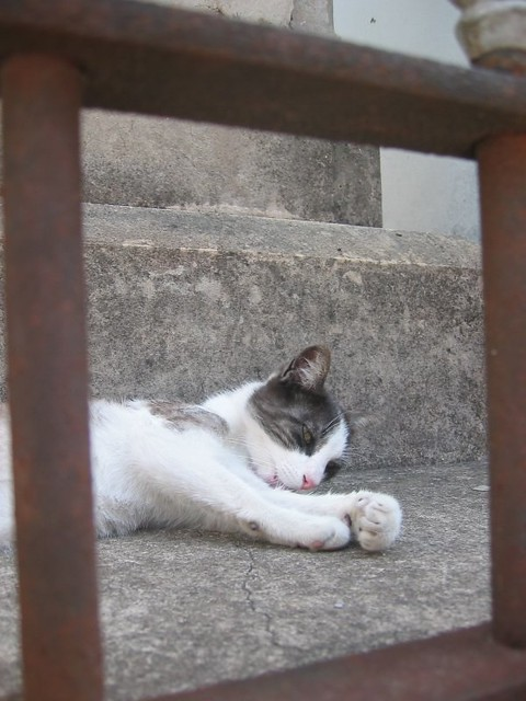 "O for ""Oh what a lazy cat"", Recoleta"