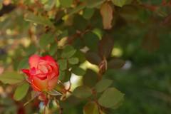 BettyBoop_1081-full (Ranj Niere) Tags: bettyboop floraandfauna