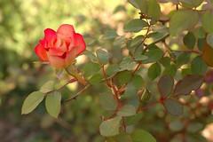 BettyBoop_1084-full (Ranj Niere) Tags: bettyboop floraandfauna