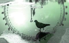 Pigeon In The Wheel, London (tarotastic) Tags: deleteme5 reflection london eye topv111 wow puddle interestingness topv555 topv333 savedbythedeletemegroup fav50 pigeon topv1111 topc50 topv999 interestingness1