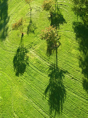 Shadows (birdcage) Tags: green dc washington shadows patterns kra05 rockcreekpark woodleypark