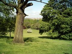 Darley Park 5 (Fluffs) Tags: park landscape trees