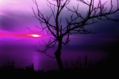A Sunset is a colored poem that ends up Amethyst (Untitled blue) Tags: pink sunset lebanon tree colors purple magenta fantasy dreams mysterious lonely amethyst untitledblue untitlism