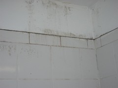 3rd Floor Bathroom Mold and Mildew