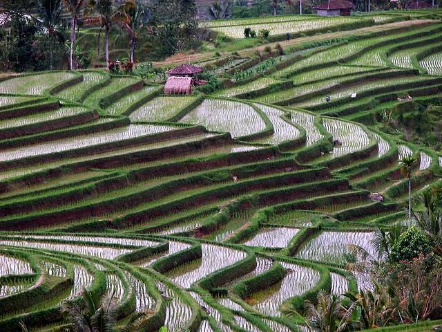 Bali Terraces