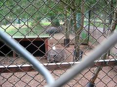 My Friend Bowser (Ellie G) Tags: animalpark animals pig johnsonpark
