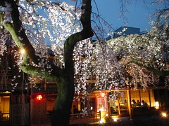 Cherry blossoms at Gion, Kyoto (yukihiro.m) Tags: japan cherry kyoto blossom 京都 桜 祇園 gion