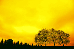 Golden future (Wen Nag (aliasgrace)) Tags: park sky colour tree topf25 yellow oslo norway wow top20favorites topv333 2550fav future 1in10f300v