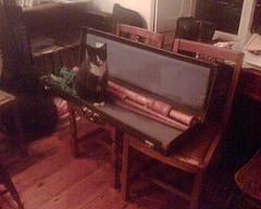 Cat in the box (skilldrick) Tags: cat shawm box cameraphone