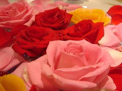 Roses (Silly Jilly) Tags: hsgals wedding