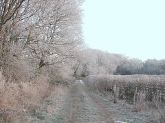 frosty (algo) Tags: 2003 2001 england white snow cold photography topv333 frost track path gutentag chilterns hedge algo bucks