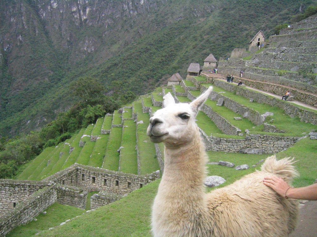 Pictures of Llamas -- Animal Photos!