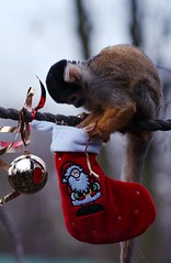 Monkeying around at Christmas